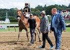 Power Broker Horse Profile Bloodhorse