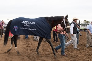 Lani Works For Belmont Three Shippers Arrive Bloodhorse