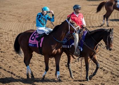 Roy H Horse Profile Bloodhorse