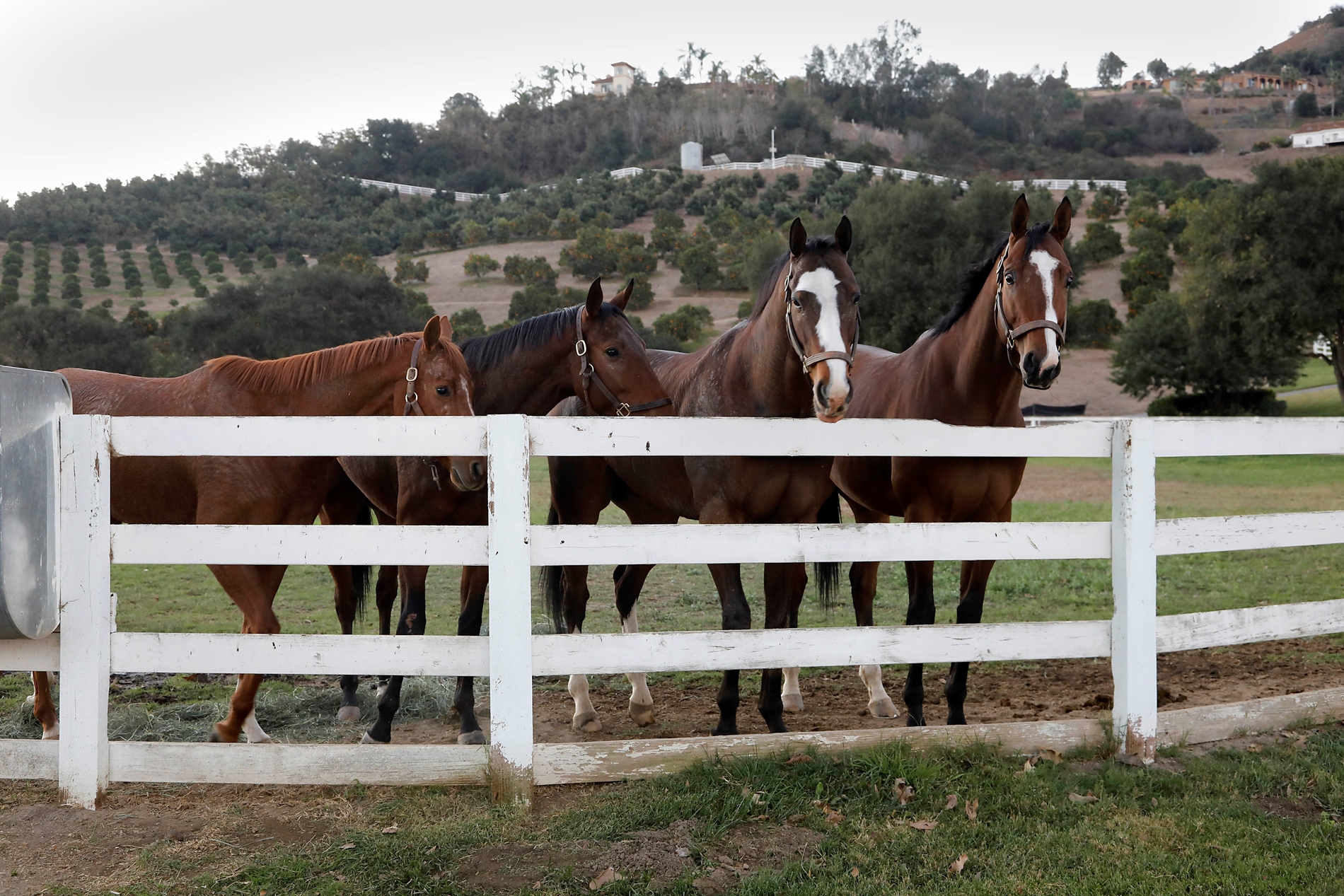 Ranch-Hands Race to Free 500 Thoroughbred Horses Amid California Wildfires