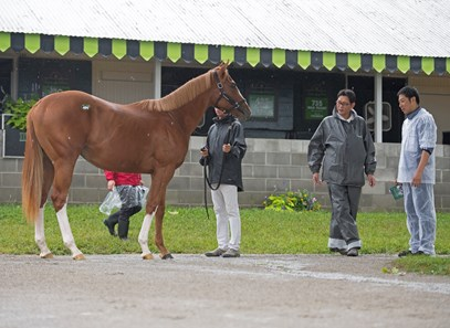 Take Charge Brandi Horse Profile Bloodhorse