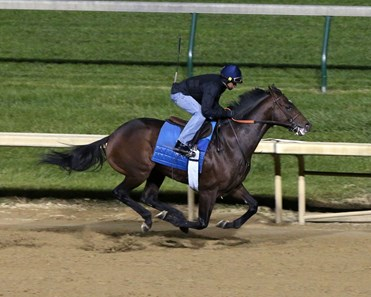 Lone Sailor Horse Profile Bloodhorse
