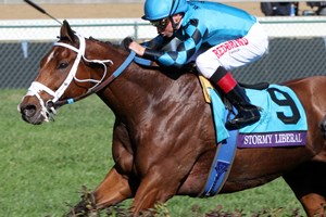 Thoroughbred Horse Racing Videos Interviews And Race