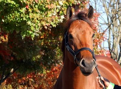 Lady Eli Horse Profile Bloodhorse