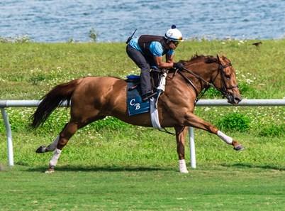 Almanaar Gb Horse Profile Bloodhorse