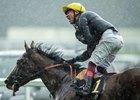 Enable Horse Profile Bloodhorse