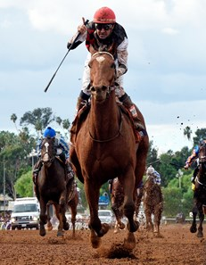 Texas Red Horse Profile Bloodhorse