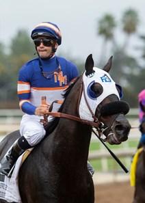 Pee Wee Reese Horse Profile Bloodhorse