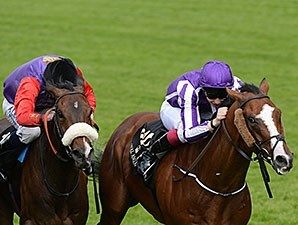 Leading Light , unbeaten in three starts this season, heads a field of 11 for the Irish St Leger.