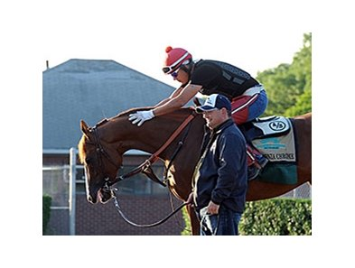 "California Chrome is part of the 2011 Foal crop, which numbers 25,500.<br><a target=""blank"" href=""http://photos.bloodhorse.com/TripleCrown/2014-Triple-Crown/Belmont-Stakes-146/i-2ZDfFms"">Order This Photo</a>"