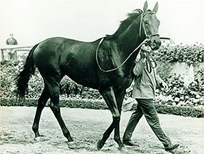 Buckpasser And His Influence On The Breed Bloodhorse