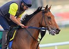 "Twilight Eclipse at Meydan on Thursday<br><a target=""blank"" href=""http://photos.bloodhorse.com/AtTheRaces-1/Dubai-2014/38085033_tQgx4h#!i=3145439270&k=kxrwLCz"">Order This Photo</a>"