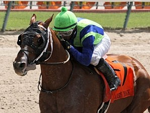 Mico Margarita won the 2013 Carry Back Stakes.