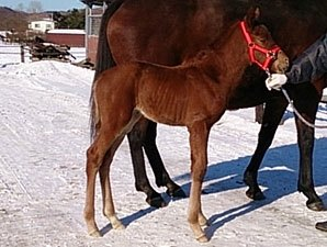 First Foal for Derby Winner I'll Have Another