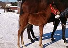 Filly out of Cosmo Meal, by Hector Protector, is the first foal for 2012 Kentucky Derby winner I'll Have Another.