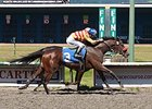 Ole's Miss won the 2014 Emerald Downs Handicap.
