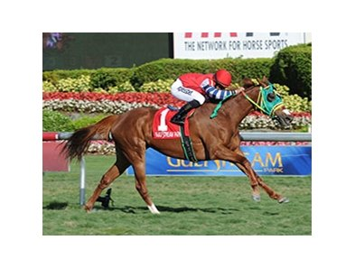 "Parranda won the 2014 Florida Sunshine Millions Filly & Mare Turf. <br><a target=""blank"" href=""http://photos.bloodhorse.com/AtTheRaces-1/At-the-Races-2014/35724761_2vdnSX#!i=3034732416&k=BCK3x2p"">Order This Photo</a>"