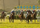 Del Mar to Begin Expansion of Turf Course