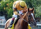 "Wise Dan<br><a target=""blank"" href=""http://photos.bloodhorse.com/AtTheRaces-1/At-the-Races-2014/i-bGhWVLF"">Order This Photo</a>"