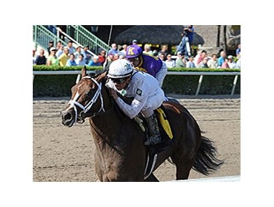 "Constitution will make his stakes debut in the Florida Derby.<br><a target=""blank"" href=""http://photos.bloodhorse.com/AtTheRaces-1/At-the-Races-2014/35724761_2vdnSX#!i=3017231611&k=NqSKM4P"">Order This Photo</a>"