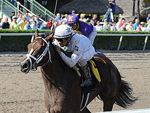 Constitution will make his stakes debut in the Florida Derby.