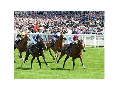 "Toronado held off Verrazano to win the 2014 Queen Anne Stakes.<br><a target=""blank"" href=""http://photos.bloodhorse.com/AtTheRaces-1/At-the-Races-2014/i-VLzdN4S"">Order This Photo</a>"