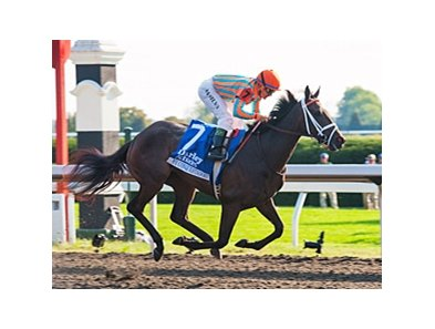 "My Conquestadory is the 122-pound highweight in the San Clemente.<br><a target=""blank"" href=""http://photos.bloodhorse.com/AtTheRaces-1/at-the-races-2013/27257665_QgCqdh#!i=2810705780&k=5fSHP3V"">Order This Photo</a>"