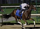 Untapable at Churchill Downs