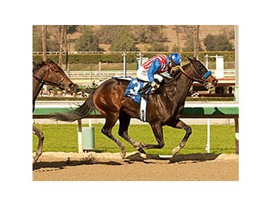 Awesome Baby won the 2014 Santa Ynez.