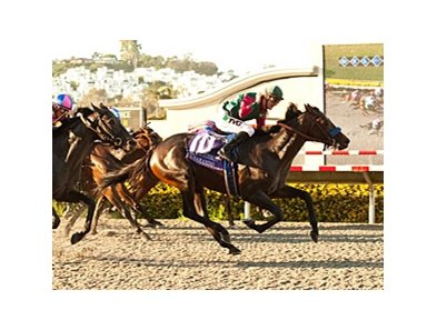 Del Mar Futurity (gr. I) winner Tamarando faces 10 in the California Cup Derby.