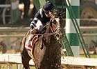 Schoolofhardrocks finished fourth in the San Felipe Stakes.