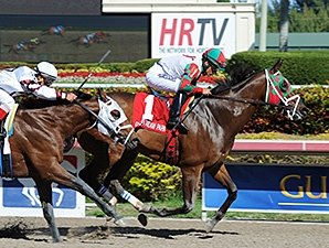 Ribo Bobo Wins Another Stakes at Gulfstream