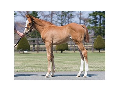 A filly by Frankel out of Goodwood March will be available during the sale.