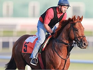 Berlino Di Tiger1 jogs at Meydan March 24.
