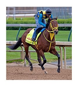 "Wildcat Red was bred by the partnership of Moreau Bloodstock International and Winter Racing Enterprise.<br><a target=""blank"" href=""http://photos.bloodhorse.com/TripleCrown/2014-Triple-Crown/Kentucky-Derby-Workouts/i-5zRsWKK"">Order This Photo</a>"