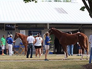 Positive Outlook for Fasig-Tipton Yearlings