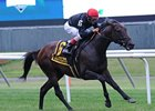"Boisterous won the 2013 Man o'War Stakes.<br><a target=""blank"" href=""http://photos.bloodhorse.com/AtTheRaces-1/at-the-races-2013/27257665_QgCqdh#!i=2632746941&k=dZ4x24r"">Order This Photo</a>"