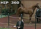 Keeneland September: Hip 360 - Sale Ring