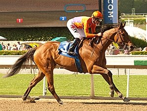 Champion Filly Beholder Coasts in 2014 Debut