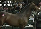 Keeneland September: Hip 291 - Sale Ring