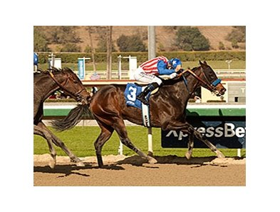 Awesome Baby faces 7 in the Santa Ysabel at Santa Anita Park.