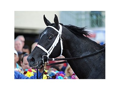 "Cairo Prince<br><a target=""blank"" href=""http://photos.bloodhorse.com/AtTheRaces-1/At-the-Races-2014/35724761_2vdnSX#!i=3041743600&k=TTfBvZj"">Order This Photo</a>"