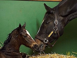 Zenyatta's new filly by War Front.