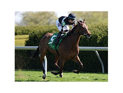 "Daring Dancer won the 2014 Appalachian Stakes. <br><a target=""blank"" href=""http://photos.bloodhorse.com/AtTheRaces-1/At-the-Races-2014/35724761_2vdnSX#!i=3186138937&k=pGCxLFx"">Order This Photo</a>"