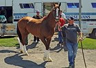 California Chrome Arrives at Belmont