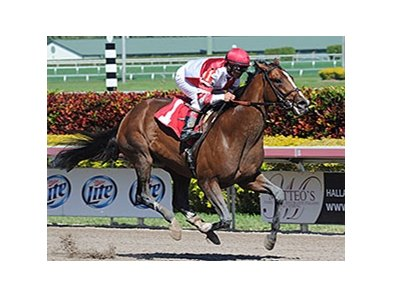 "Normandy Invasion rolls to victory at Gulfstream Park.<br><a target=""blank"" href=""http://photos.bloodhorse.com/AtTheRaces-1/At-the-Races-2014/35724761_2vdnSX#!i=3088094862&k=XPfQQVv"">Order This Photo</a>"