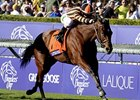 "2012 Breeders' Cup Turf winner Little Mike takes on the Dubai Duty Free.<br><a target=""blank"" href=""http://photos.bloodhorse.com/BreedersCup/2012-Breeders-Cup/Turf/26130116_ZC6sF3#!i=2194159033&k=zwgxjfH"">Order This Photo</a>"