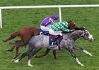 "The Grey Gatsby gets by Australia to take the Irish Champion Stakes.<br><a target=""blank"" href=""http://photos.bloodhorse.com/AtTheRaces-1/At-the-Races-2014/i-bVTJBjz"">Order This Photo</a>"