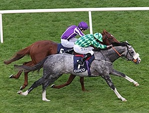 The Grey Gatsby gets by Australia to take the Irish Champion Stakes.