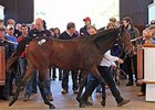 Lot 1427, a Cacique colt, sold for 100,000 guineas.